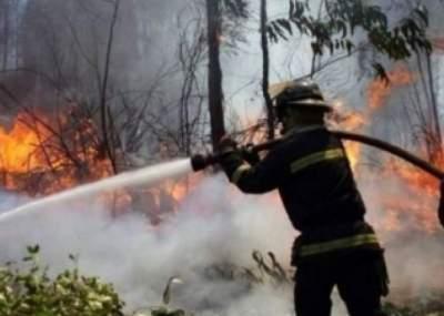 Se declara Alerta Roja para Las Cabras por incendio forestal: Van casi 11 hectáreas consumidas